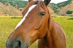 Cabeça de cavalo, em sua cara imagem de stock