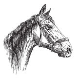 Cabeça de cavalo no profil com o illustratio do desenho da mão do vetor do freio Foto de Stock