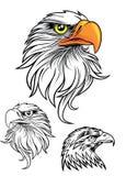 Cabeça de Eagles Fotografia de Stock Royalty Free