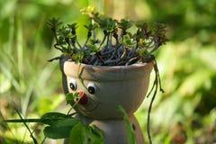 Cabeça de florescência Foto de Stock Royalty Free