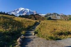 A cabeça de fuga do paraíso na montagem Rainier National Park fotos de stock royalty free