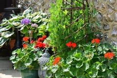 Cabeça de Grey Buddha entre plantas de jardim Imagem de Stock