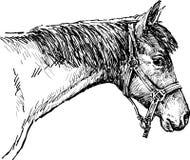 Cabeça de um cavalo Foto de Stock Royalty Free