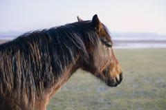 Cabeça de um cavalo Fotos de Stock Royalty Free