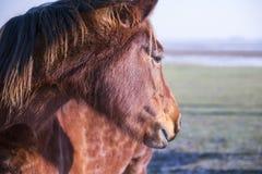 Cabeça de um cavalo Fotografia de Stock