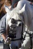 Cabeça de um cavalo branco 10 Imagem de Stock Royalty Free