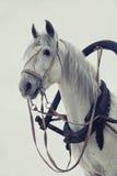 Cabeça de um cavalo branco no chicote de fios no fundo branco Fotografia de Stock