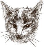 Cabeça de um gatinho pequeno Foto de Stock Royalty Free