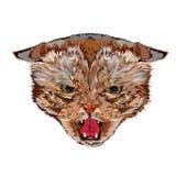 Cabeça de um gato mau Imagem de Stock
