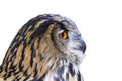 A cabeça de uma coruja de águia em um perfil imagens de stock