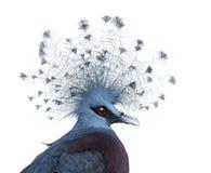 A cabeça de Victoria coroou o pombo fotografia de stock royalty free