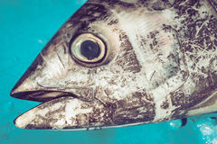 Cabeça do atum no fishmarket Fotos de Stock