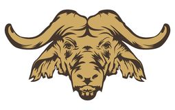 Cabeça do búfalo Imagem de Stock