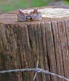 Cabeça do caranguejo em um coto fotografia de stock