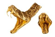 Cabeça do cascavel e combinação da boca do interior imagem de stock