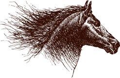 Cabeça do cavalo ilustração royalty free