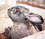 Cabeça do coelho em exterior Imagens de Stock Royalty Free