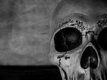 Cabeça do crânio fotos de stock royalty free