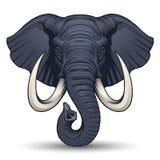 Cabeça do elefante Fotos de Stock Royalty Free