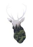 Cabeça do fanfarrão com folha de prova da natureza Imagem de Stock Royalty Free