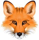Cabeça do Fox, imagem realística Ilustração Stock