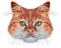 Cabeça do gato Ilustração do Vetor
