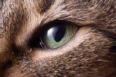 Cabeça do gato Imagens de Stock Royalty Free