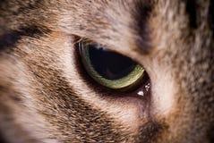 Cabeça do gato Fotos de Stock Royalty Free