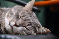 Cabeça do gato do sono foto de stock