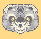 A cabeça do gato persa Imagem de Stock Royalty Free