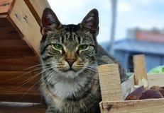 A cabeça do gato que senta-se entre caixas Imagens de Stock