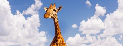 Cabeça do girafa sobre o fundo do céu azul e das nuvens Foto de Stock