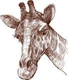 Cabeça do Giraffe ilustração do vetor