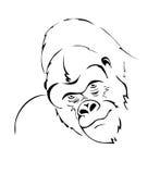 Cabeça do gorila Fotografia de Stock Royalty Free