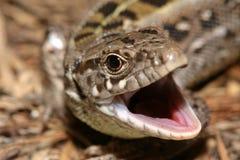 Cabeça do lagarto de areia Fotografia de Stock Royalty Free
