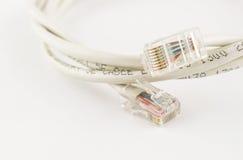 Cabeça do Lan com cabo da rede informática no fundo branco Fotos de Stock