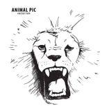 Cabeça do leão do esboço Foto de Stock Royalty Free