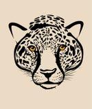 Cabeça do leopardo Imagens de Stock