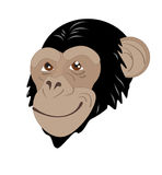 Cabeça do macaco Fotografia de Stock