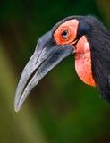 Cabeça do papagaio Imagens de Stock Royalty Free