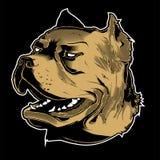 Cabeça do pitbull Ilustração do vetor Imagem de Stock