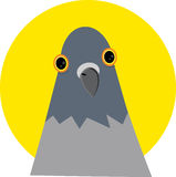 A cabeça do pombo sem corpo Fotografia de Stock Royalty Free