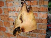 Cabeça do porco Imagens de Stock