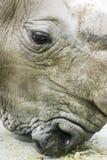 Cabeça do rinoceronte Fotografia de Stock Royalty Free
