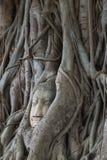 Cabeça do ` s da Buda na raiz Ayutthaya tailândia Fotografia de Stock Royalty Free