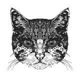 Cabeça do ` s do gato Ilustração do vetor ilustração royalty free