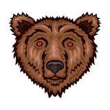 Cabeça do urso isolada no fundo branco Ilustração do vetor Fotos de Stock