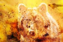 Cabeça do urso marrom poderoso, pintura a óleo na lona e colagem do gráfico Contato de olho ilustração do vetor