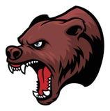 Cabeça do urso pardo Imagem de Stock Royalty Free