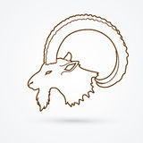 Cabeça dos íbex ilustração stock